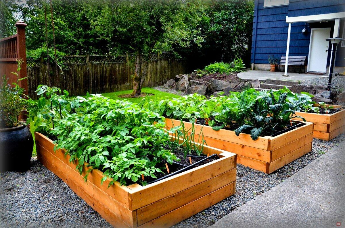 помидоры не истощают землю