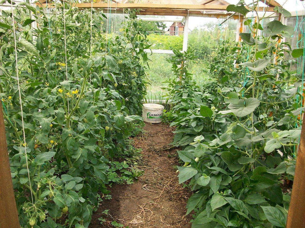 влияние растений в теплице