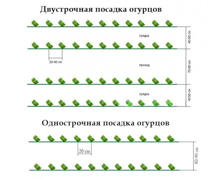 двухстрочная посадка огурцов