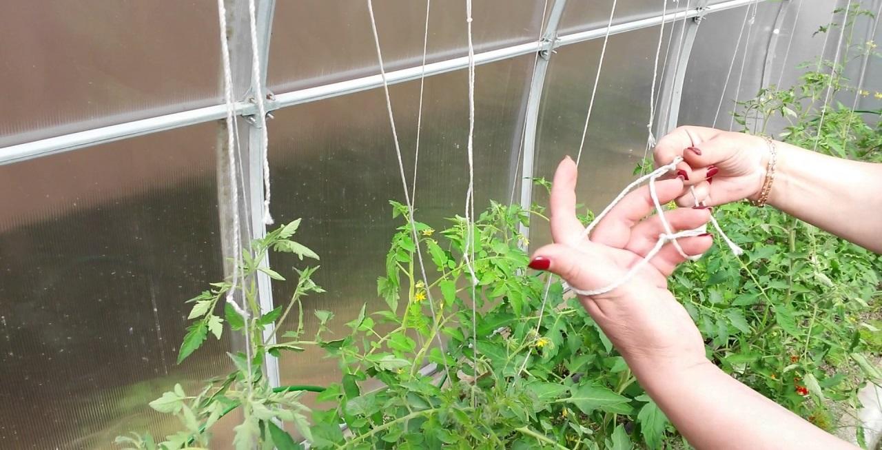 подвязка помидор свободная петля