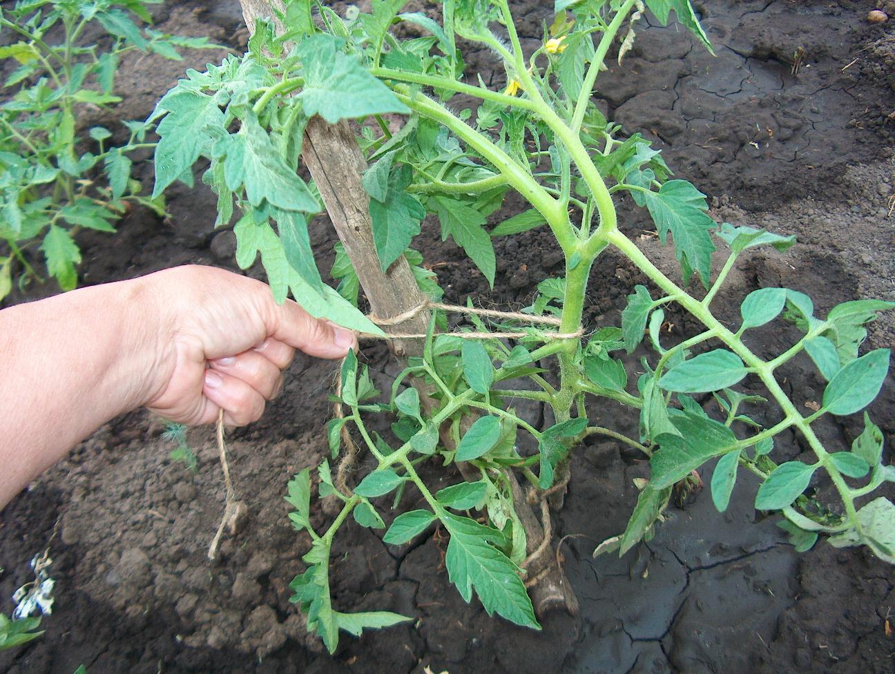 колышки для подвязывания помидор