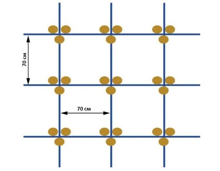 квадратно-гнездовая посадка огурцов