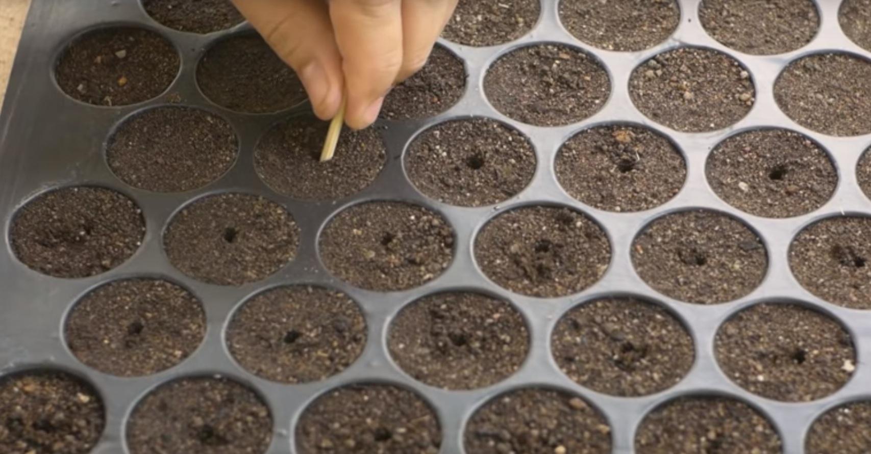 как сажать семена огурцов