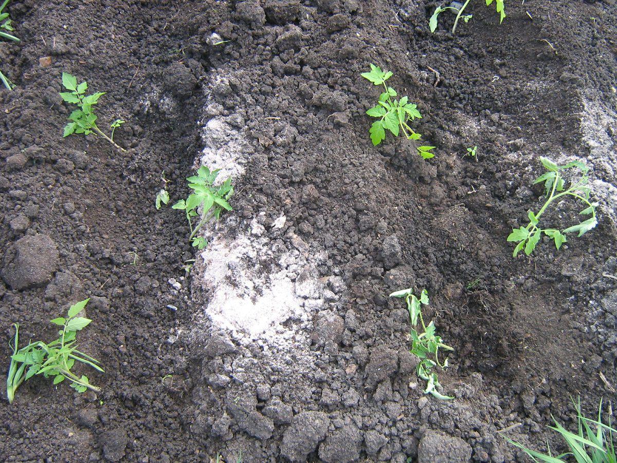 удобрения рассады помидоров