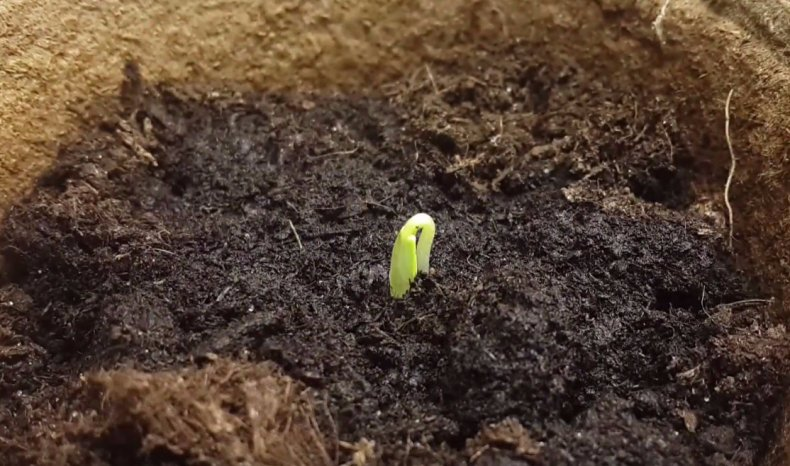 время всходов семян