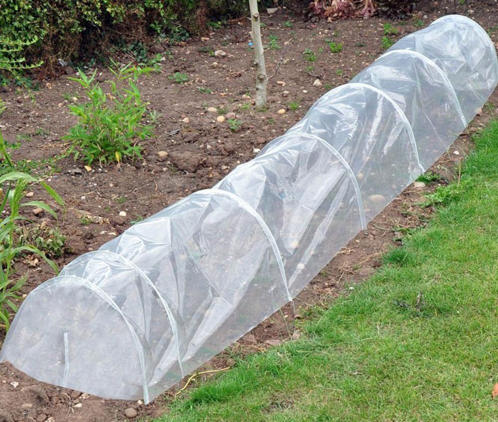 укрыть рассаду томатов