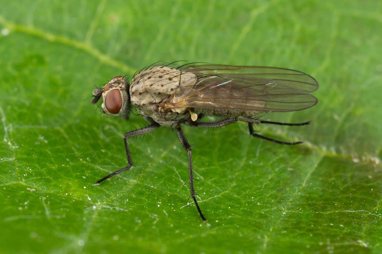 ростковая муха н аогурцах