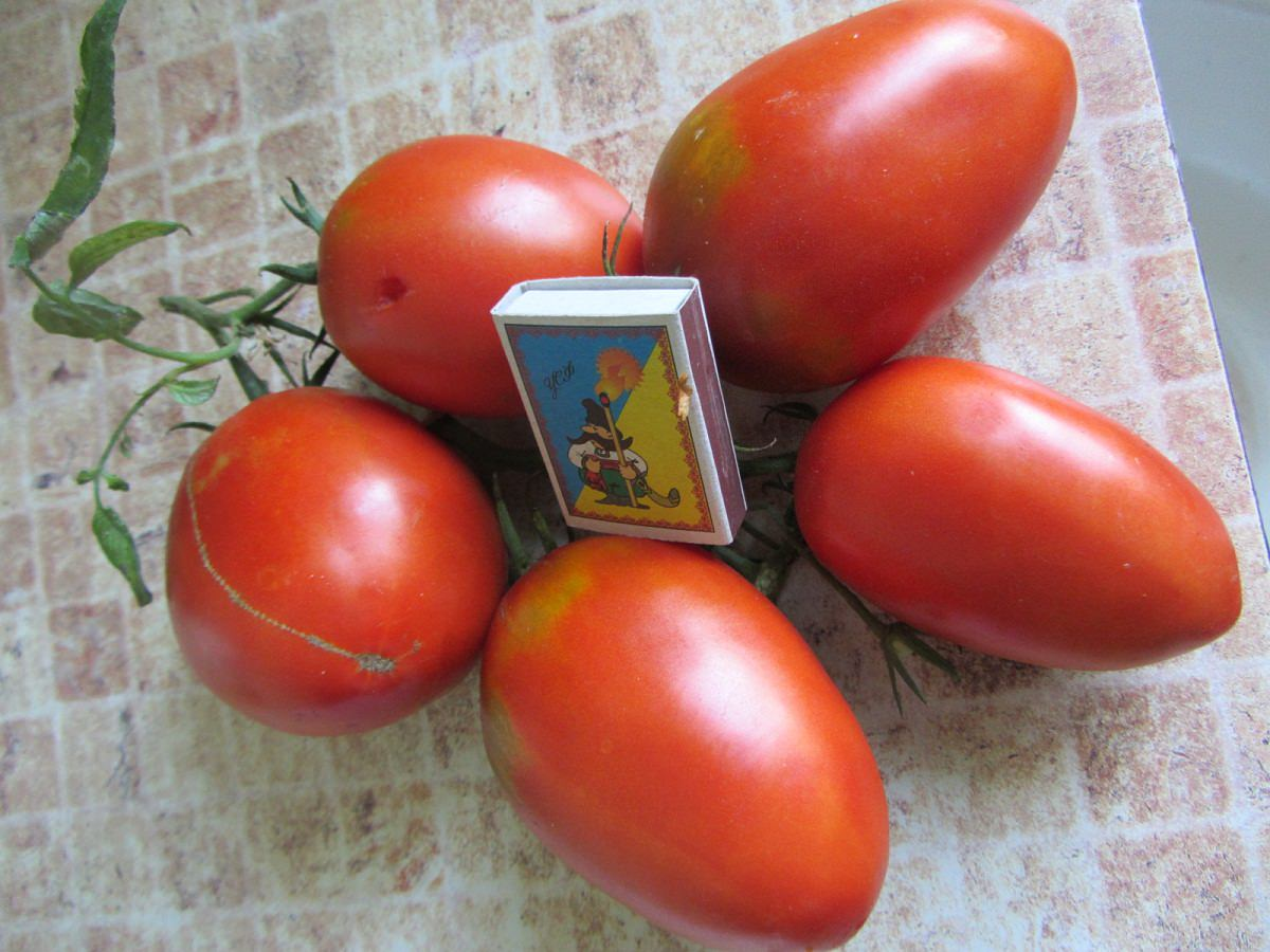 томат де барао гигант