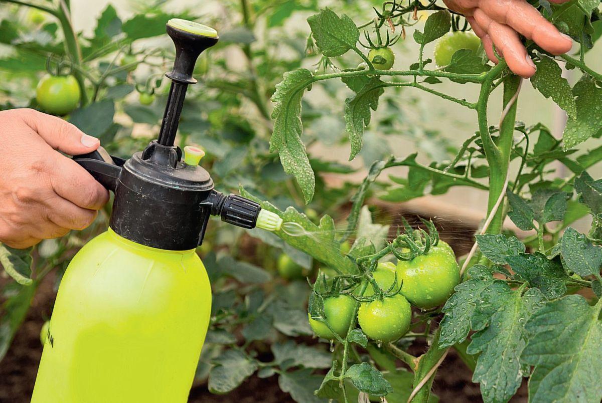 обработка томата от вредителей