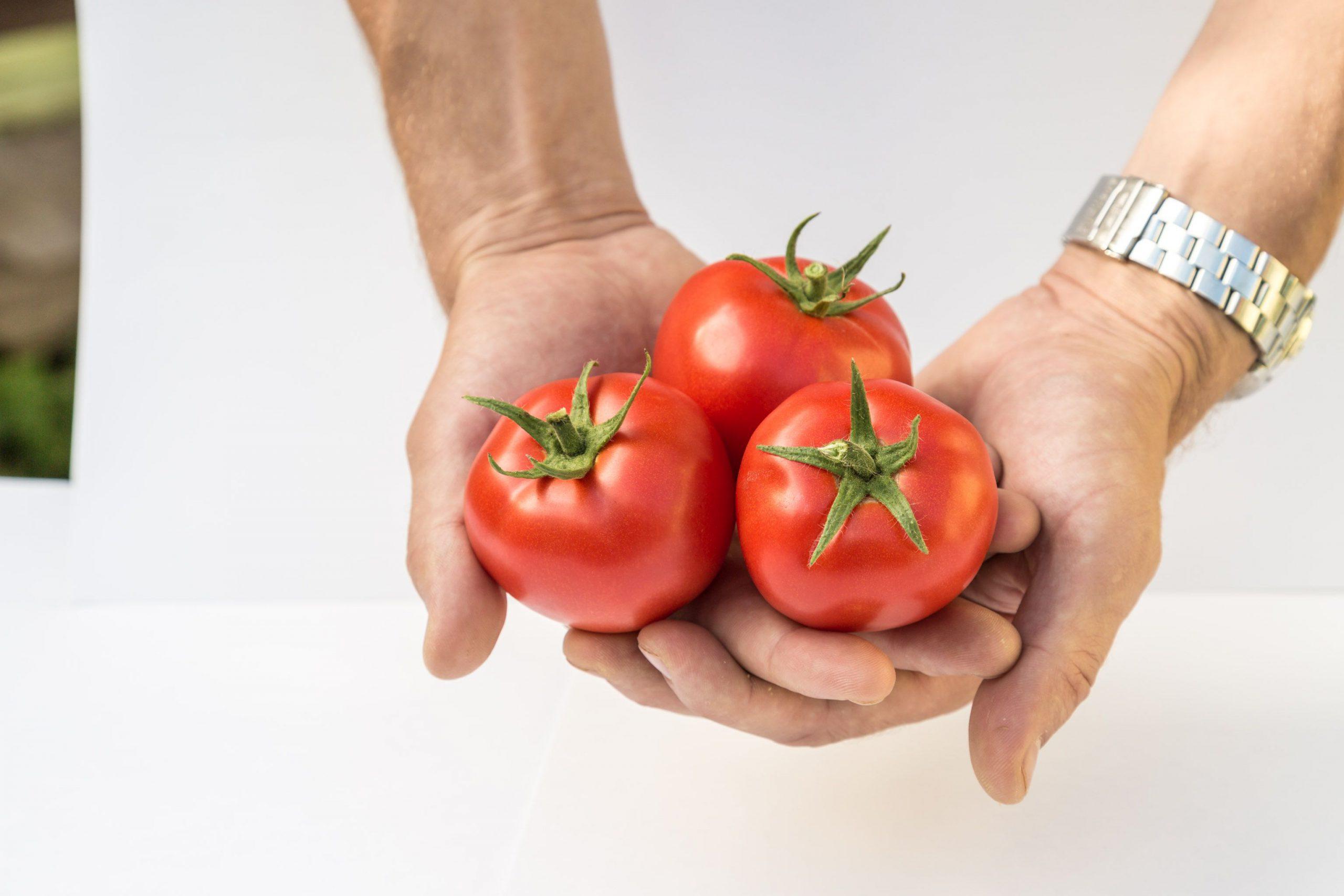сорт томатов под название Любаша
