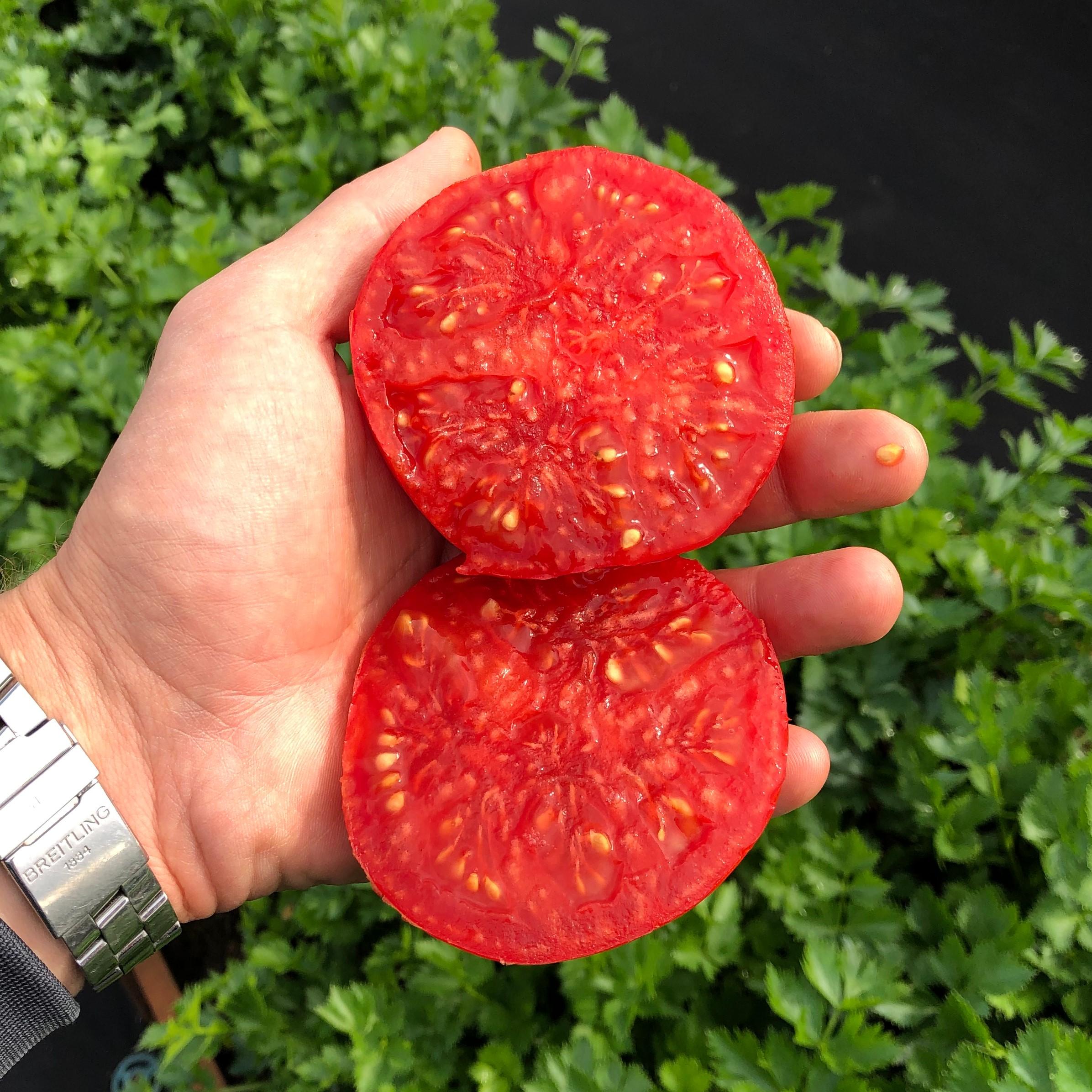 преимущества томатов Сибирский карлик