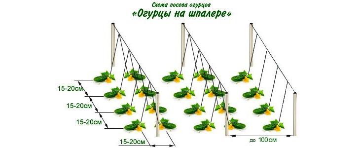 вертикальные грядки для огурцов