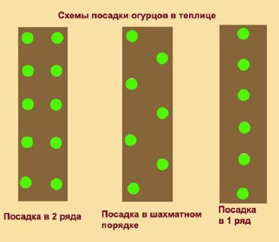 схемы посадок огурцов