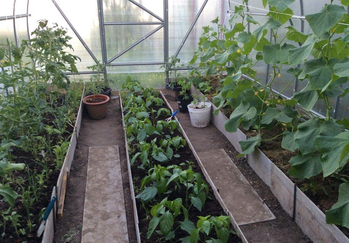 грядки с огурцами и помидорами