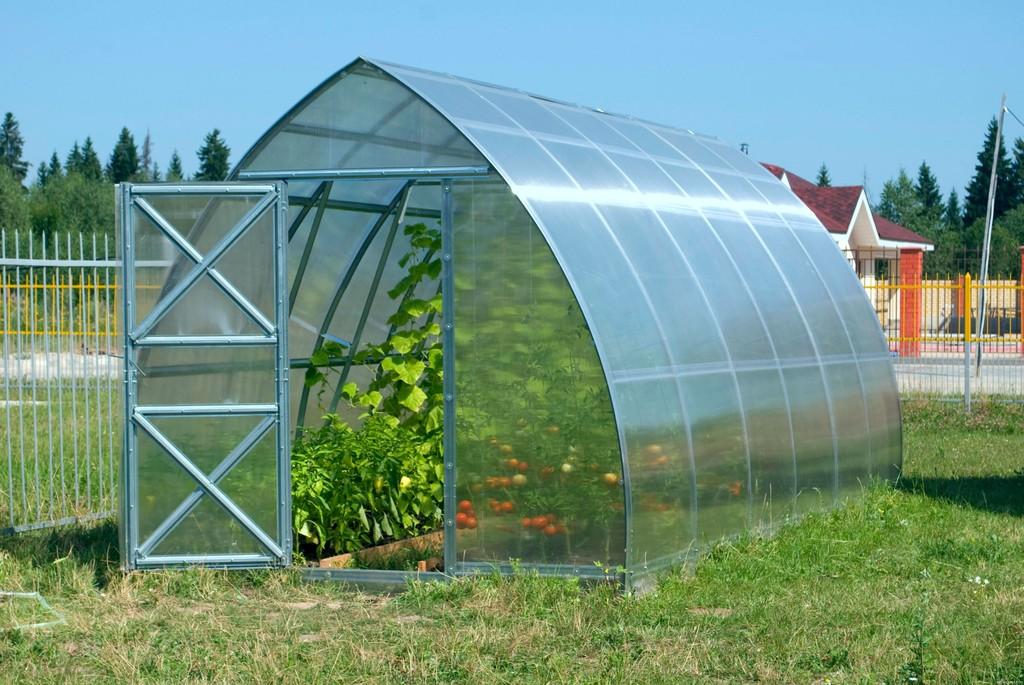 теплица из поликарбоната для выращивания помидор
