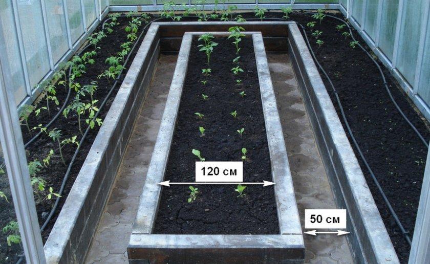 грядки для томатов в теплице