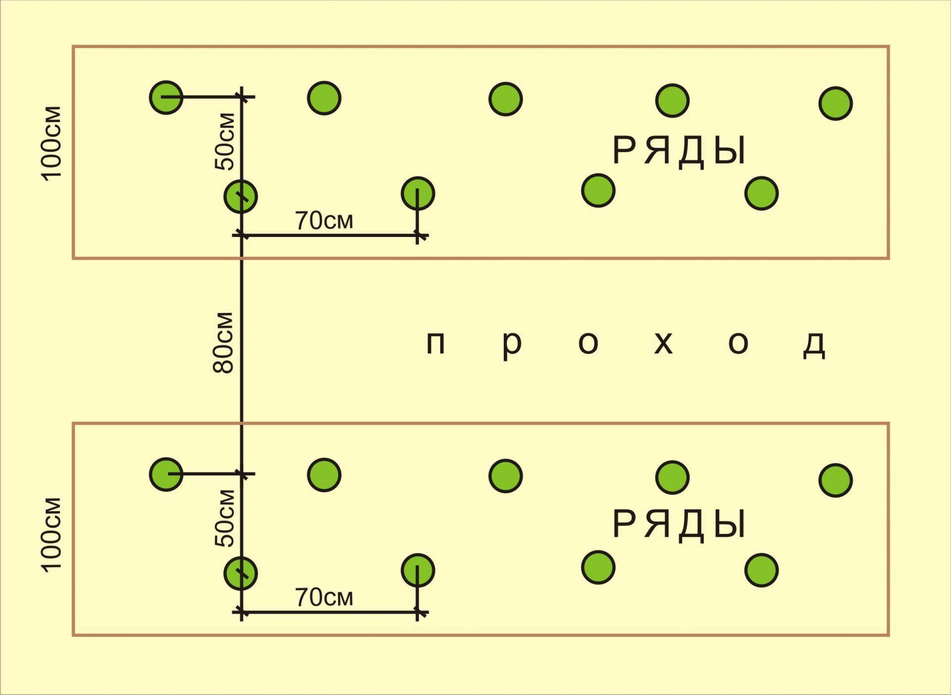 шахматная схема посадки томата
